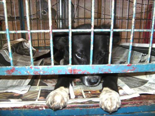 Laudos confirmam maus-tratos a animais retirados de pet shop