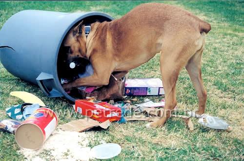 Seu cachorro come lixo? Saiba como evitar