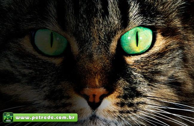 face-rosto-cara-gato-perdido-desaparecido-procurado-petrede