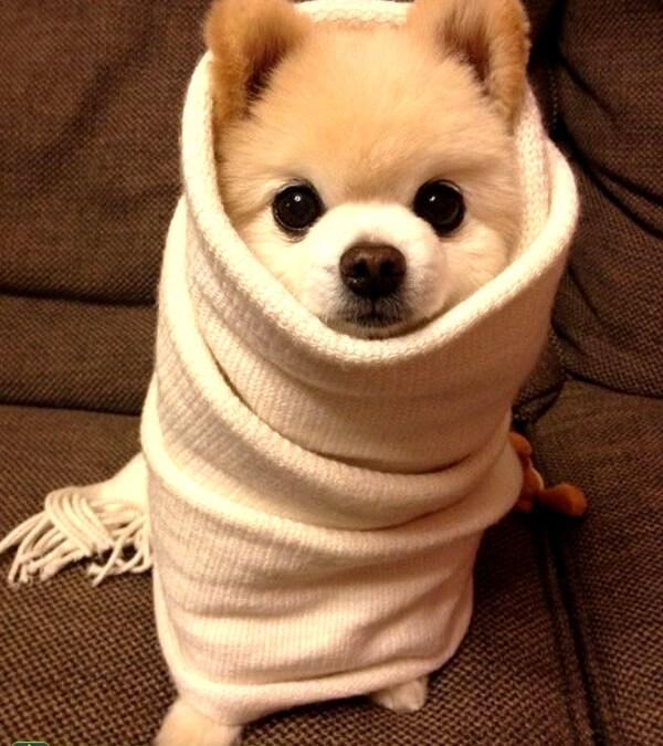 Veja como cuidar dos cães e gatos no inverno