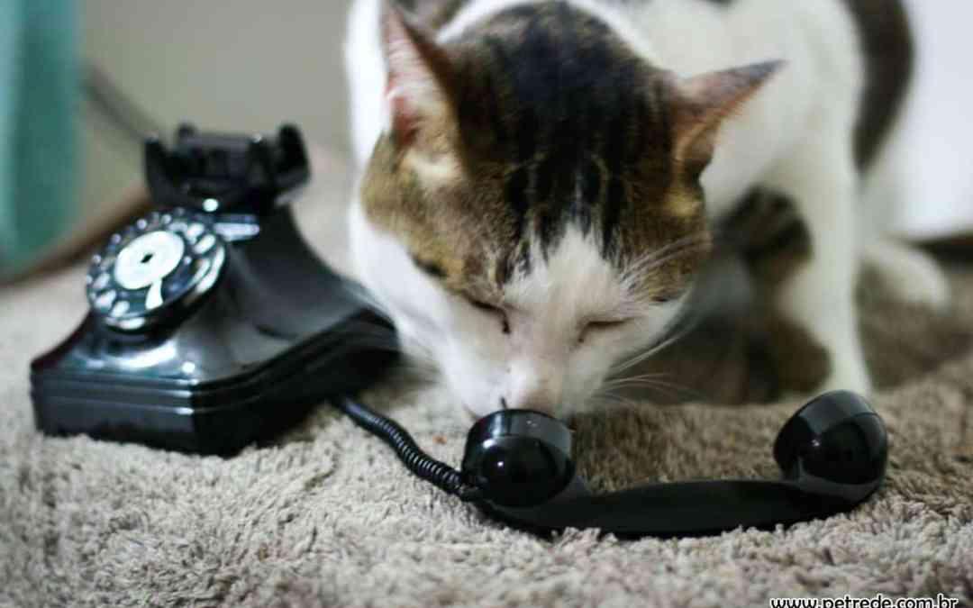 Quem prefere gatos tem 7% maior chance de ter um Android