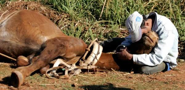 Homem chora morte de égua atropelada em beira de estrada no interior de São Paulo