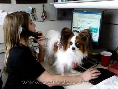 cachorro-no-trabalho-petrede