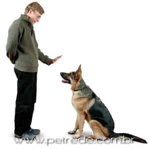 Você mesmo pode ensinar truques básicos a seu cachorro