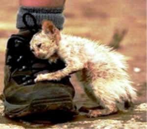 gato-abandonado-morrendo-de-fome-petrede