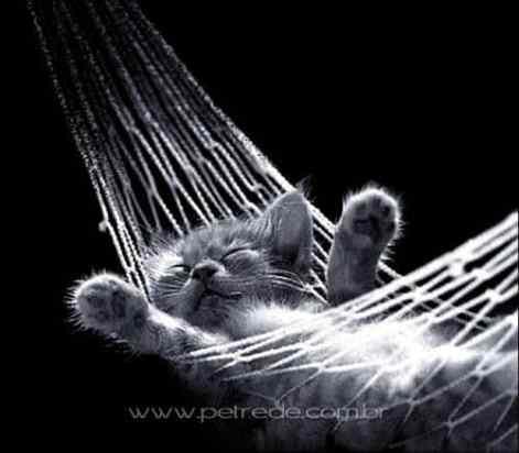 gato-dormindo-preguica-rede-sono-petrede