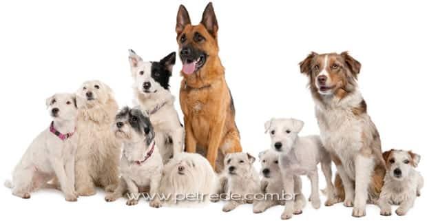 Quanto custa um amigo? Veja as raças de cachorro mais caras do mundo
