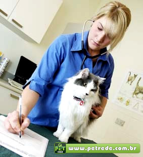 veterinaria-medica-gato-consulta-exame-petrede