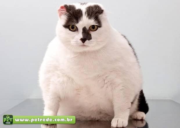 gato-obeso-gordo-petrede