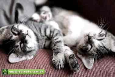 gatos-dormindo-filhotes-petrede