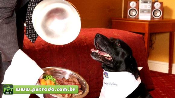 Do petisco ao prato principal: aprenda receitas saudáveis para o seu cão