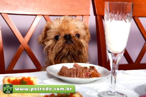 cachorro-comida-refeicao-janta-alimento-dieta-almoco-prato-petrede