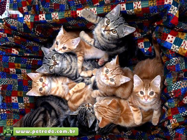 Você conhece a Ilha do Gato?