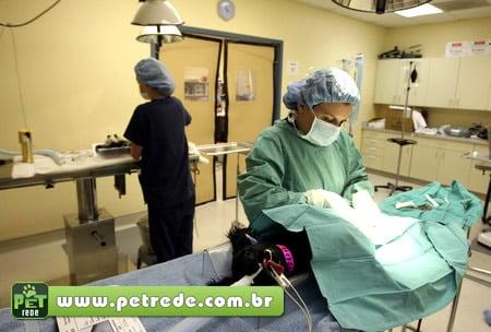 hospital-cirurgia-castracao-operacao-medico-veterinario-petrede