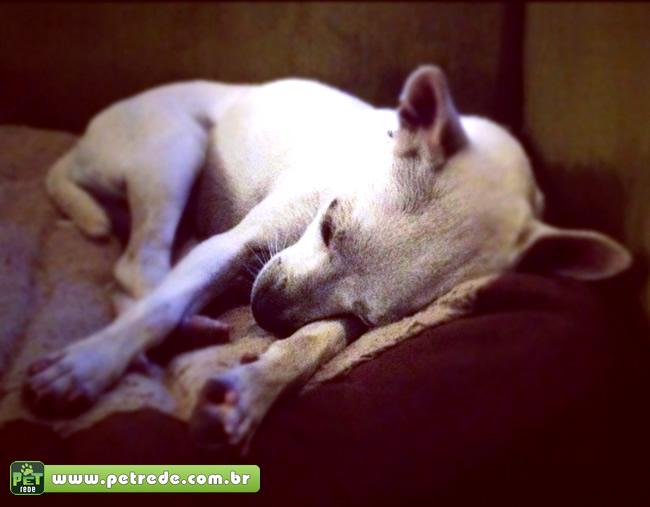 Intoxicação Animal: Veja como lidar com intoxicação em cães e gatos