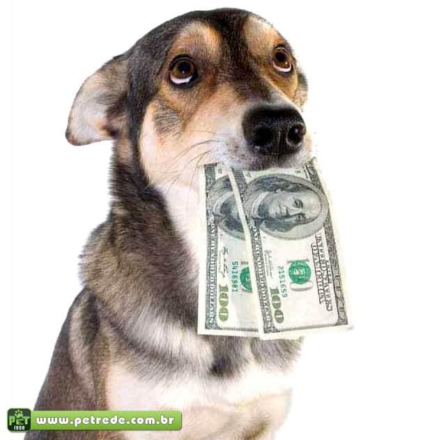 Mercado de animais de estimação movimenta R$ 9,6 bilhões no Brasil e cresce em Caxias