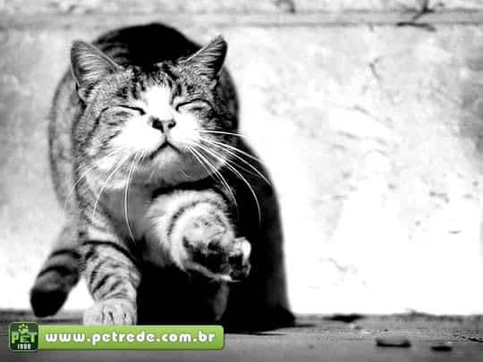 Ajudando gatos a encontrar o caminho de casa