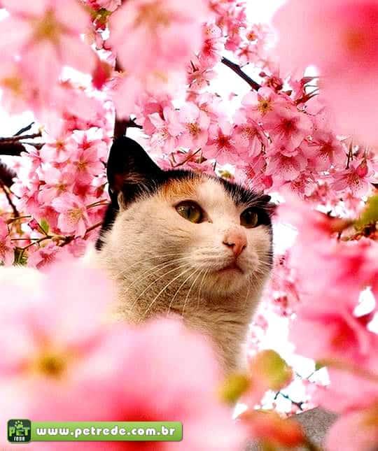 gato-flores-petrede
