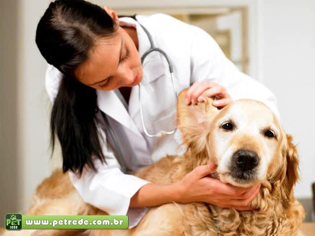 cachorro-labrador-exame-consulta-veterinaria-petrede