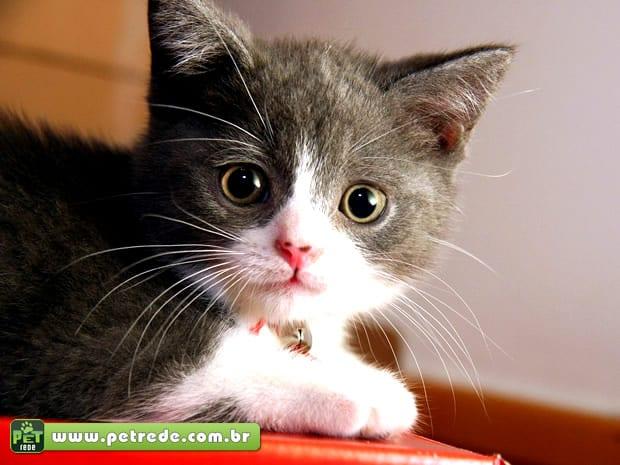 Conheça os mitos e verdades sobre castração de gatos e cachorros