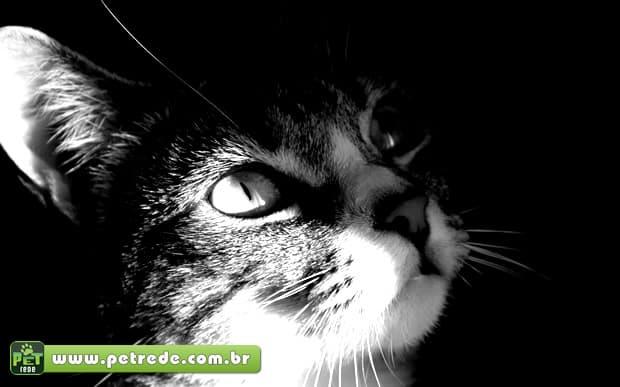 Gato vira 'herói' ao descobrir tumor no pulmão do dono