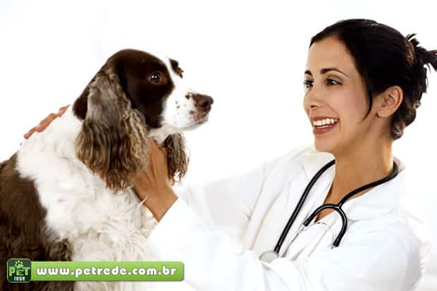 Conselho Federal de Medicina Veterinária padroniza regras para documentos veterinários