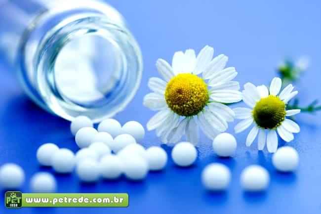 Homeopatia é alternativa para tratar bichos de estimação