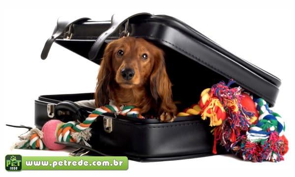 Feriados à vista: cinco dicas para viajar com seu pet