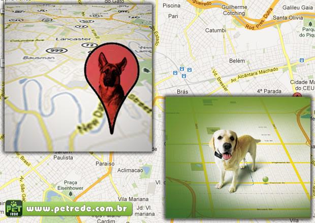GPS para cachorro: veja modelos e saiba como eles funcionam