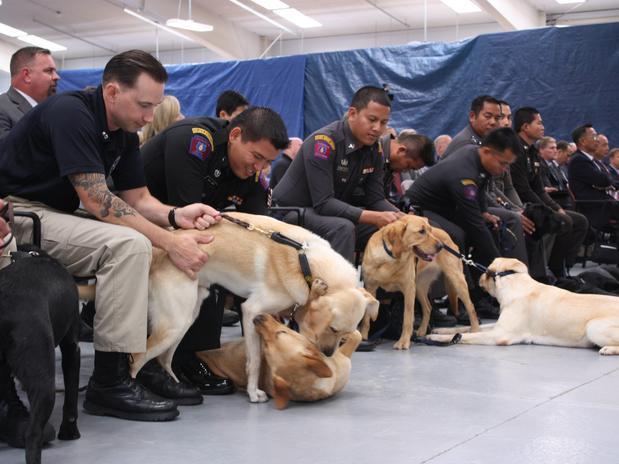 EUA: centro treina cães para a guerra contra o terrorismo