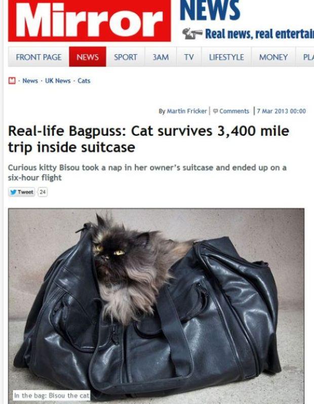 gato-viaja-acidentalmente-escondido-petrede