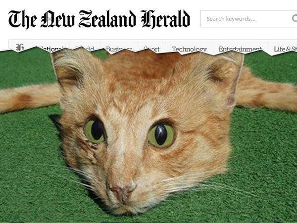 Tapete de gato morto vendido por US$ 1,9 mil revolta usuários de site