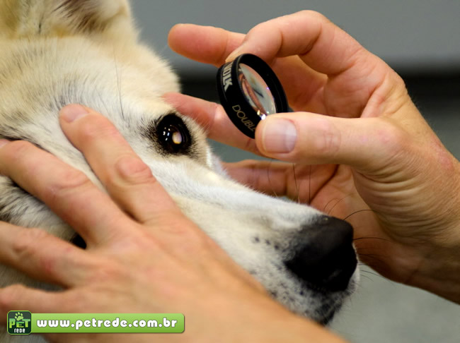 Cães também sofrem de problemas oculares