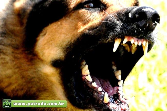 Dona de cachorro terá que indenizar Correios por ataque ao carteiro