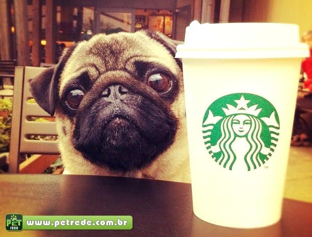 cachorro-pug-cafe-starbuks-petrede