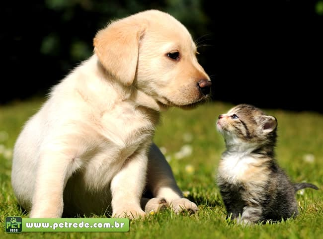 8 dicas para receber (bem) um animal de estimação
