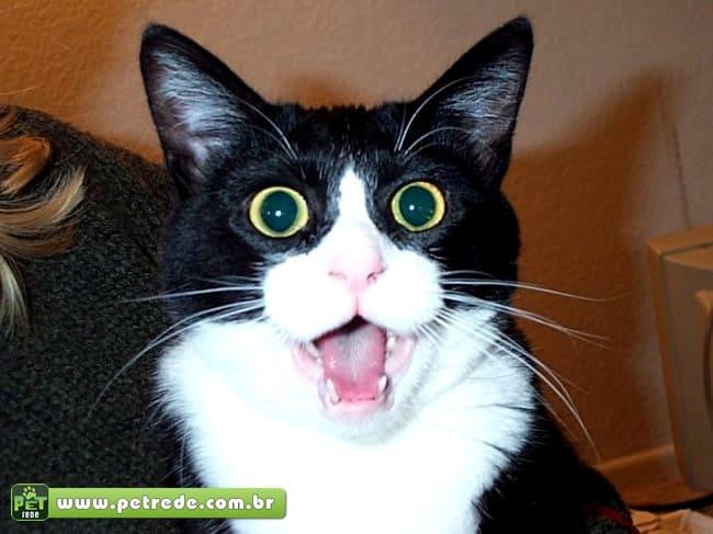Coleira promete traduzir o que miado do seu gato significa