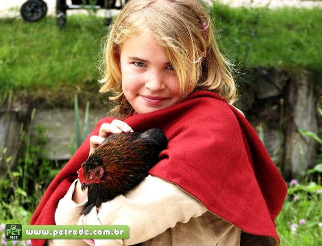 Empresa americana vende galinhas de estimação pela internet
