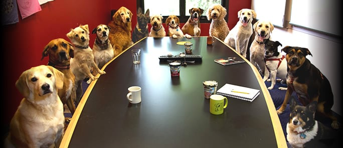 Animais melhoram o ambiente de trabalho nas empresas