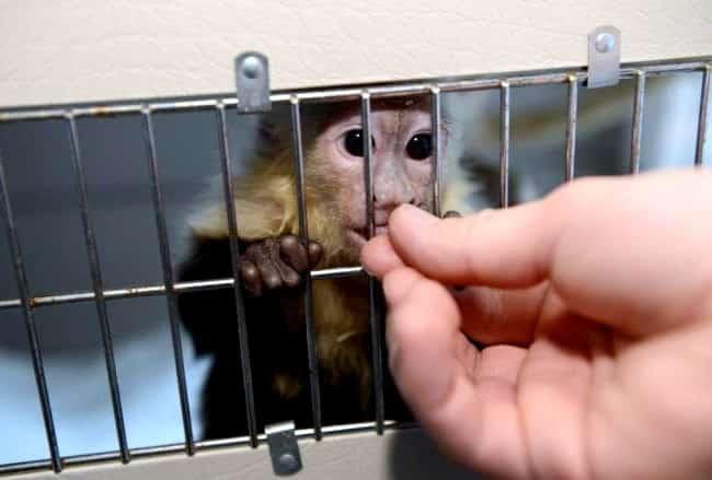 Justin Bieber abandona macaco de estimação na Alemanha