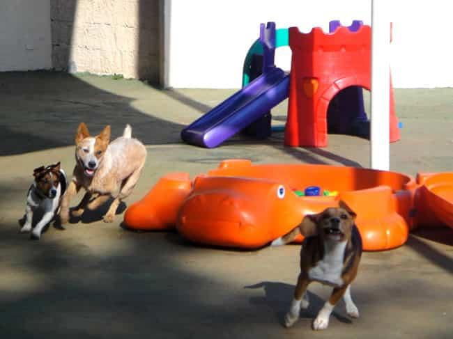 Planet Dog Resort oferece creche premium para cães – PetRede ed540dba8b