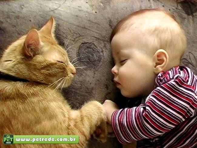Gatos e crianças pequenas