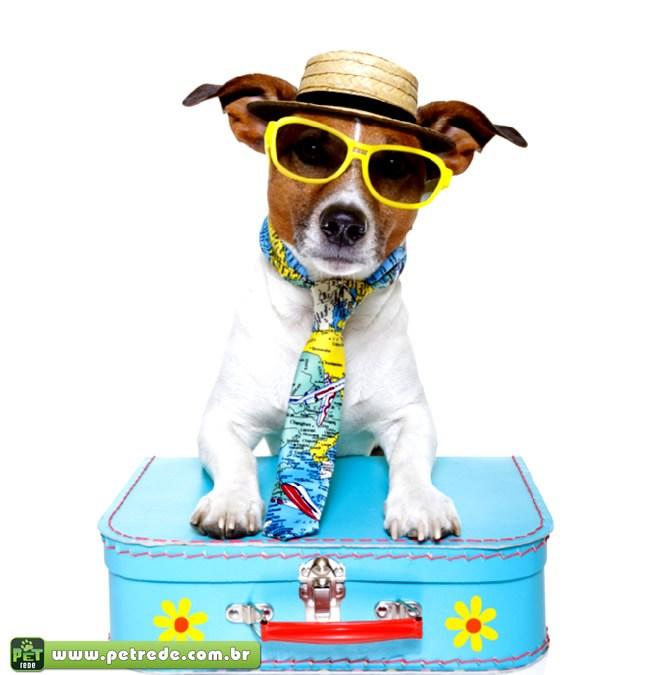Vai viajar nas férias? Saiba o que fazer com seu animal de estimação