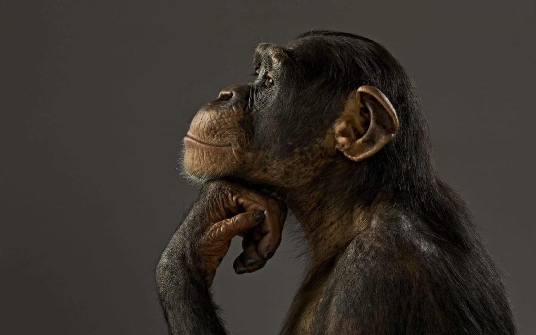 Cientistas dizem que alguns animais planejam o futuro