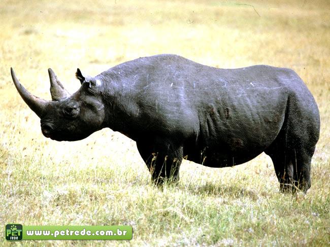 Divulgada lista atualizada dos animais ameaçados de extinção