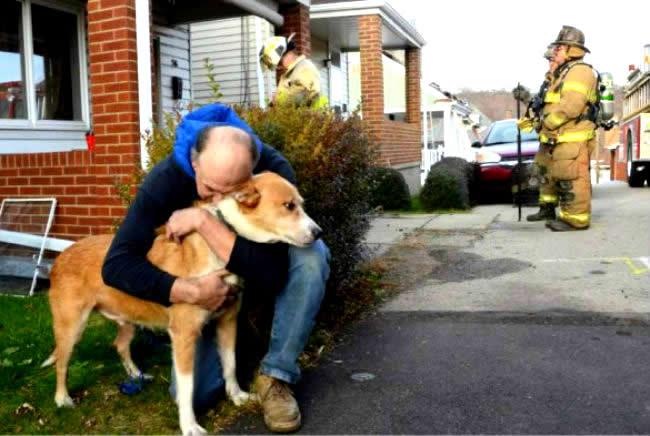 Cachorro adotado salva dono de casa pegando fogo nos Estados Unidos