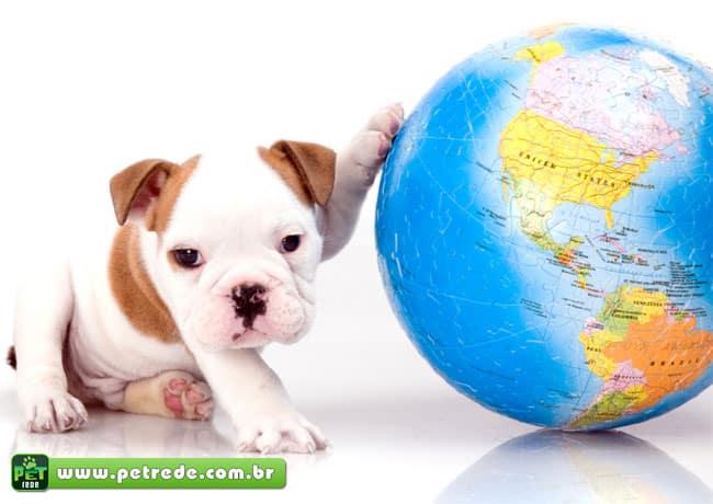 Passaporte para cães e gatos deve reduzir burocracia