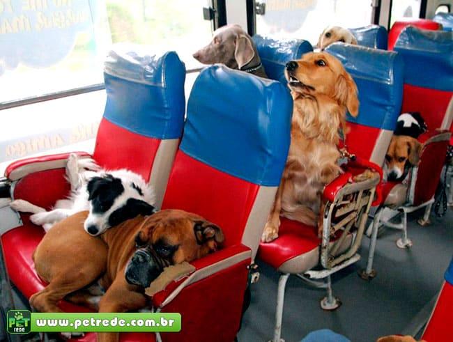 Pet shop já se prepara para aprovação de transporte de animais nos ônibus municipais