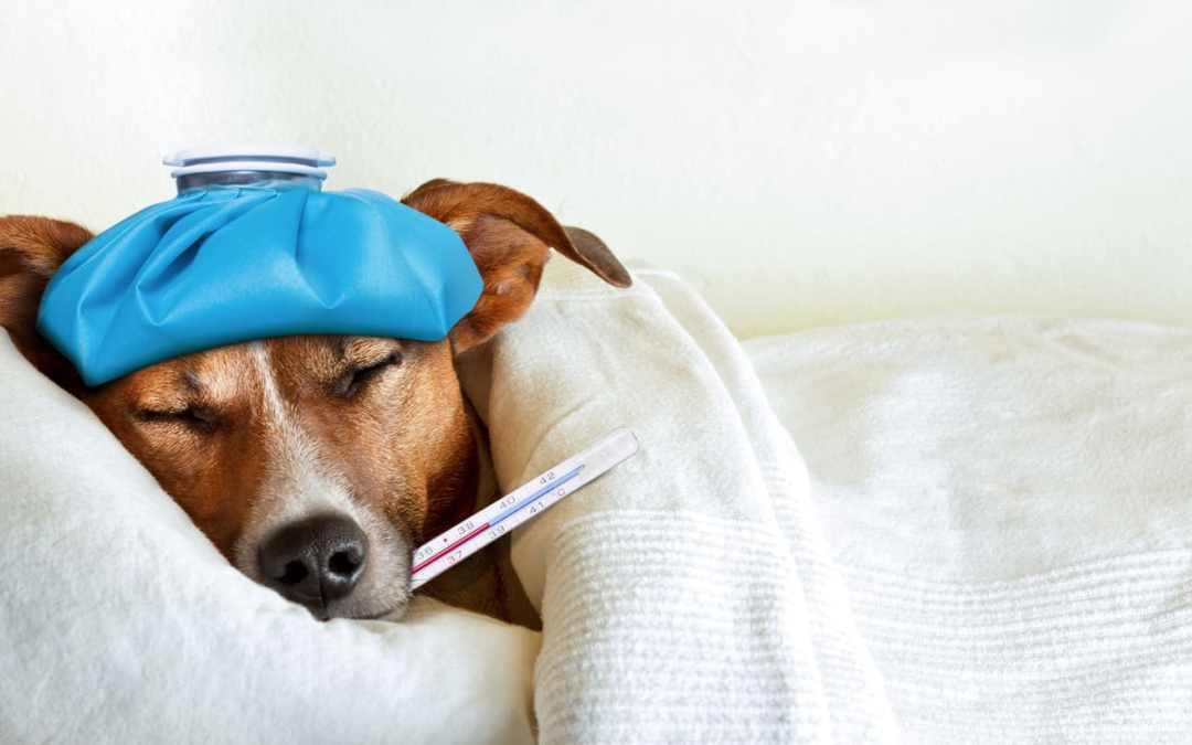 Como evitar que seu animal fique gripado