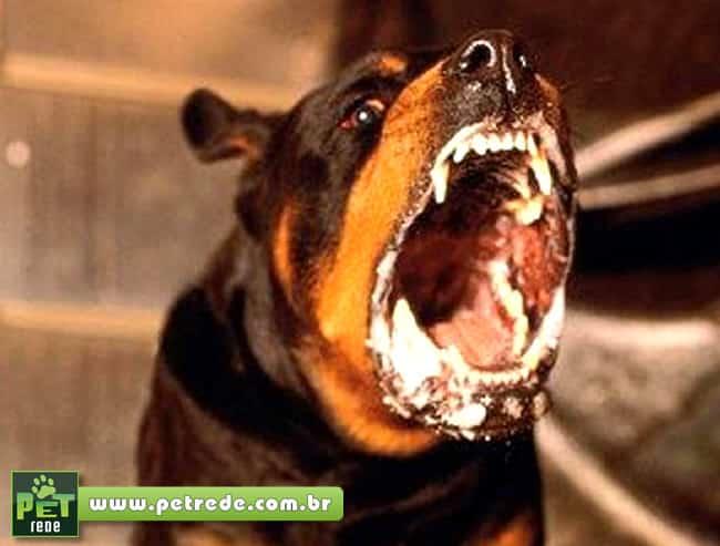 cachorro-raiva-ataque-feroz-petrede